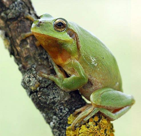 97d2eeacc Anfibios y Reptiles