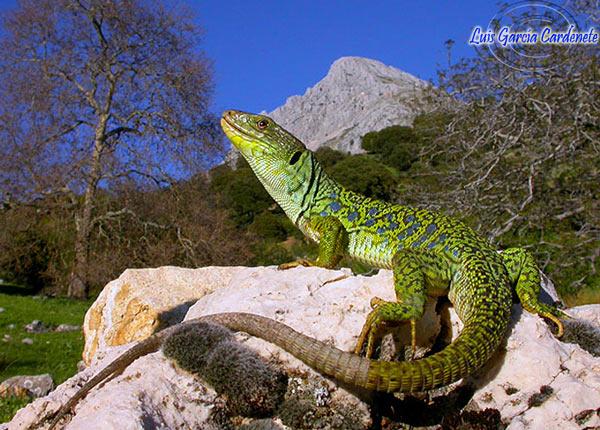 fichas de reptiles