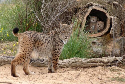 Imagenes de la naturaleza y animales